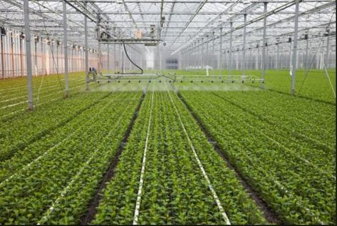 Smart Agriculture Is Bringing Some Changes You May Touch