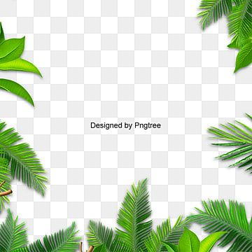 Leaves Palm Green Leaf Leaves Vector Background Png Transparent Clipart Image And Psd File For Free Download In 2021 Spring Flowers Background Leaf Clipart Watercolor Leaves