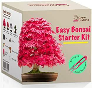 Grow Your Own Bonsai Kit Easily Grow 4 Types Of Bonsai Trees With Our Complete Beginner Friendly In 2020 Bonsai Kit Bonsai Tree Types Seed Kit Gifts
