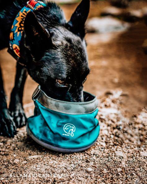 Refresh and refuel wherever you are with our portable drinking and food bowls! ⠀ ⠀ PC: @all_american_team⠀ ⠀ ⠀ ⠀ ⠀ ⠀ ⠀ ⠀ ⠀ ⠀ #embarkpets #instadog #instagramdogs #traildog #adventuredog #dogswhohike #hikingdogsofinstagram #hikingwithdogs #campingwithdogs #campingdog #hikingdog #beachdog #traveldog #wilddog #ilovemydog #dogsonadventures #dogsofinstagram #wolfdog #runningdog #adventuredogs #swimmingdog