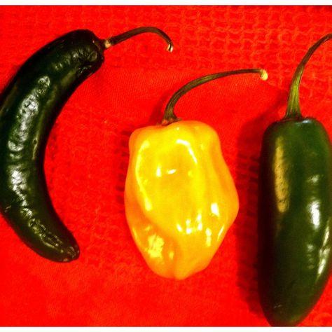 Homemade Three Chili Hot Sauce Recipe on Food52