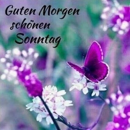 Sonntag kostenlos guten bilder morgen Schönen Sonntag