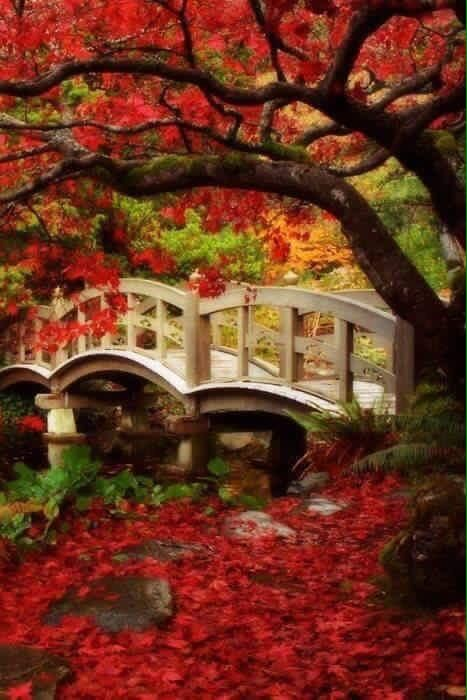 Beautiful Fall colors and bridge Fall Pictures, Pretty Pictures, Beautiful World, Beautiful Places, Beautiful Gorgeous, Seasons Of The Year, All Nature, Beautiful Landscapes, Bridges