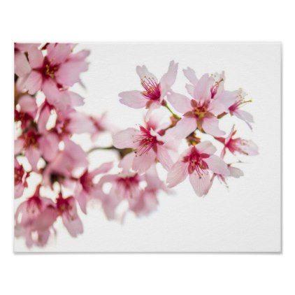 Cherry Pink And Apple Blossom White Eddie Calvert Popular Flowers Blossoms Art Most Popular Flowers