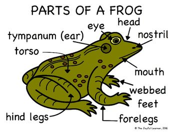 Parts Of A Frog Diagram Freebie Frog Frogs For Kids Third Grade Reading