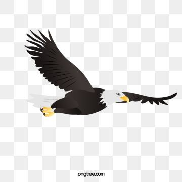 Eagle Vector Eagle Asuka Animal World Png Transparent Clipart Image And Psd File For Free Download Eagle Drawing Eagle Vector Eagle Art
