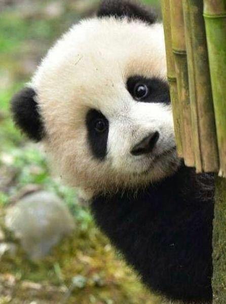画像 女さんが5chでエチエチな裸を晒すwwwwwwwwwwwwwwwwww ピシーニュース P ゞ パンダ 面白い 可愛すぎる動物 パンダ 赤ちゃん