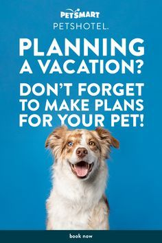 Full Service Hotel With 24 7 On Site Care An On Call Vet Dogs Can Enjoy Playtime Salon Services All Inclusive Packages Person In 2020 Dog Solution Pets Baby Dogs