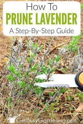 Pin On Gardening Organically