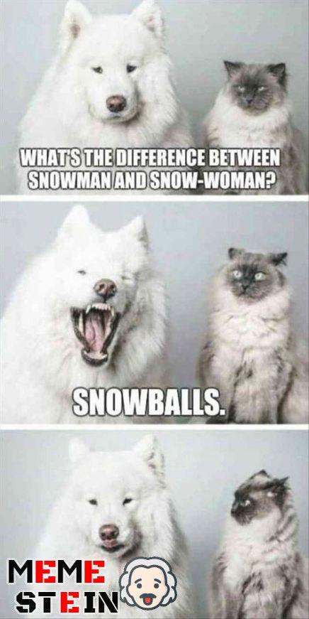 Pet Memes Clean : memes, clean, Hilarious, Funniest, Memes, Clean, Funny, Memes,, Animal, Jokes,, Animals, Captions