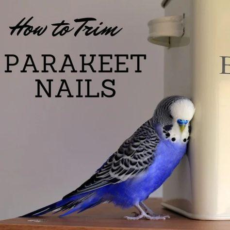 150 I My Budgie Gatsby Ideas Pet Birds Budgies Parakeet