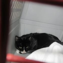 Citrus County Animal Services In Inverness Florida In 2020 Saving Cat Pet Adoption Adoption