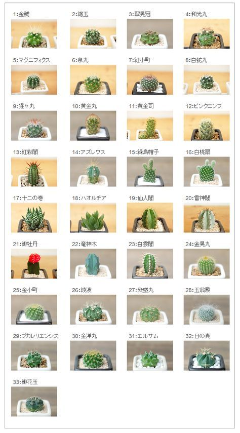 Product Name Types Of Cactus Plants Cactus Types Planting