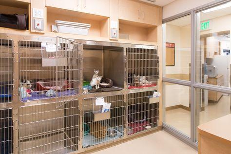Cat Ward Storage Of Litter Pans Cat Carriers Veterinerler Hayvan