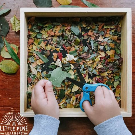 Nature Activities, Preschool Learning Activities, Toddler Learning, Autumn Activities, Toddler Activities, Play Based Learning, Teaching Kindergarten, Early Learning, Outdoor Education