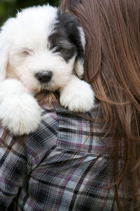 10 Best Dogs For Kids Best Family Dogs 1 Will Make You Awww