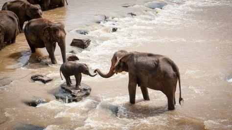 Fondo de Pantalla de Elefantes, Cría, Manada, Río, Ayuda, Salvajes