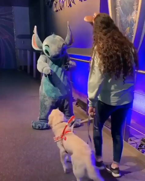 Ezra the service dog gets a well deserved break to go to meet her favorite character Stitch.