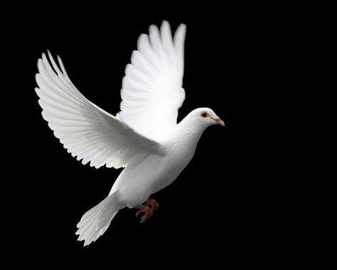Paz Mensaje Divino...