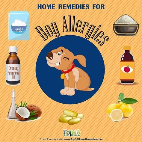 Allergies In Dogs Treatment With Natural Remedies Top 10 Home Remedies Dog Allergies Remedies Home Remedies For Allergies Allergy Remedies