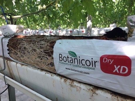 Coir substrate producer, Botanicoir, is adding a brand-new