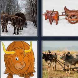 Bisonte O Bufalos Animales De Tiro Con Imagenes 4 Fotos 1