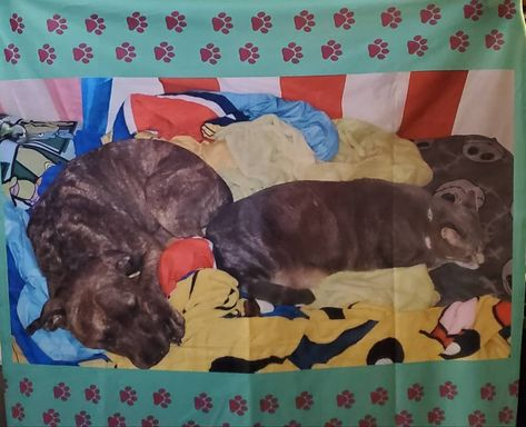 always gets me the best gifts. It's a picture of our pets laying on blankets, on a blanket! 😍😍 Thank you ❤ #valentinesday #pets #blanket #picture