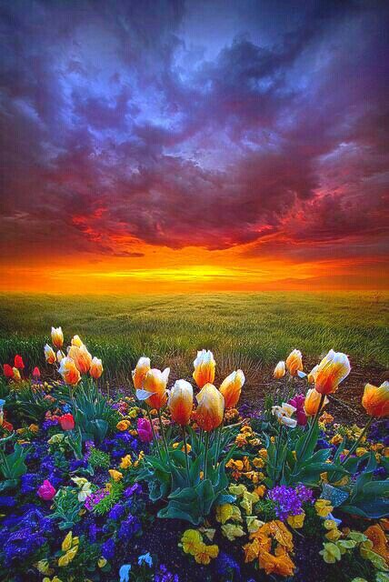 Sunset Field Flowers Nature Photography Beautiful Nature Beautiful Landscapes