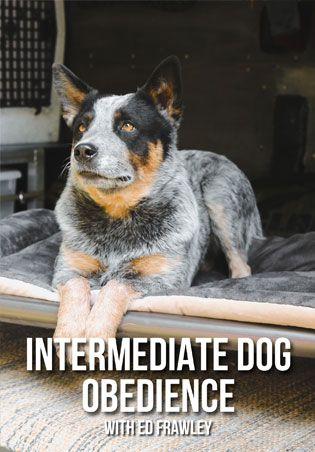 Intermediate Dog Obedience Dvd Dog Training Training Your Dog Dogs