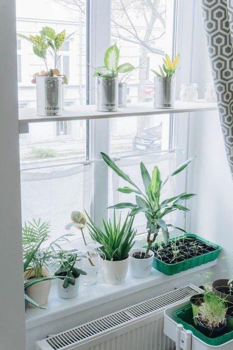 20++ Fenster regal fuer pflanzen ideen