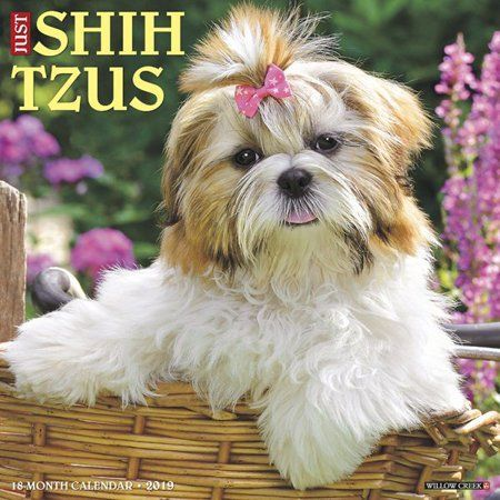 Office Supplies Shih Tzus Dog Breeds Dogs