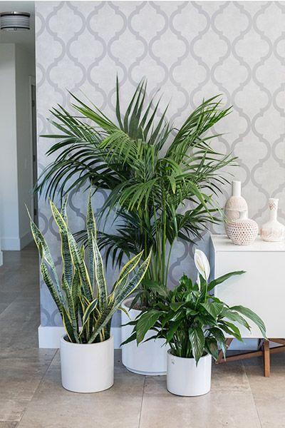 Indoor Plants en 2019 | Decoration plante, Jardin intérieur ...