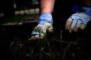 6bb1b665d09931f027b922af55edfbba - Simple Essay On My Hobby Gardening