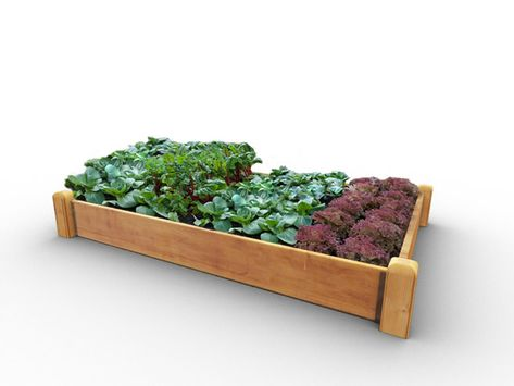 Https Www Quickcrop Co Uk Product Deluxe 9in High Raised Bed Kit