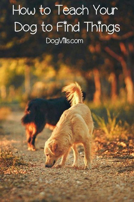 Dog Training Equipment Dog Training 101 Duet Dog Training Heel