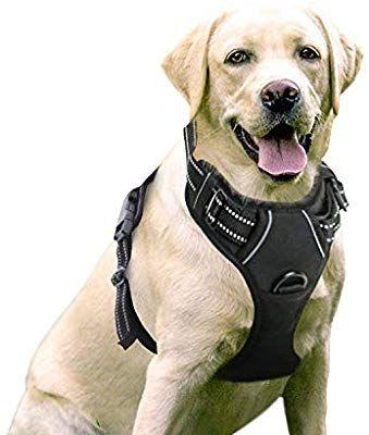 Amazon Com Rabbitgoo Dog Harness No Pull Pet Harness Adjustable