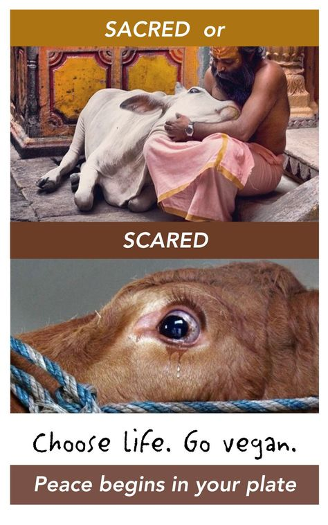 #vegan #veganquotes #vegan