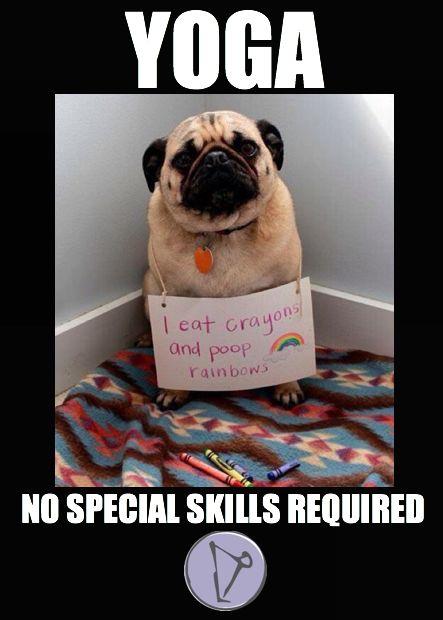 6bbf9bd76fa23e90e92257cc9c40f02f rainbows funny animals dog shaming yogaeverydamnday no special skill required yoga