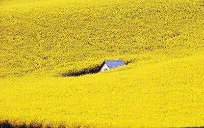 Fiori Gialli Toscana.Pin Di Reny Su Y E L L O W H A P P I N E S S Paesaggi Natura E