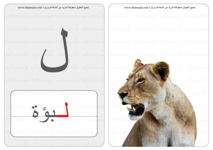 حرف كلمة صورة بطاقات الحروف الحيوانات 6 3 Animals Lion