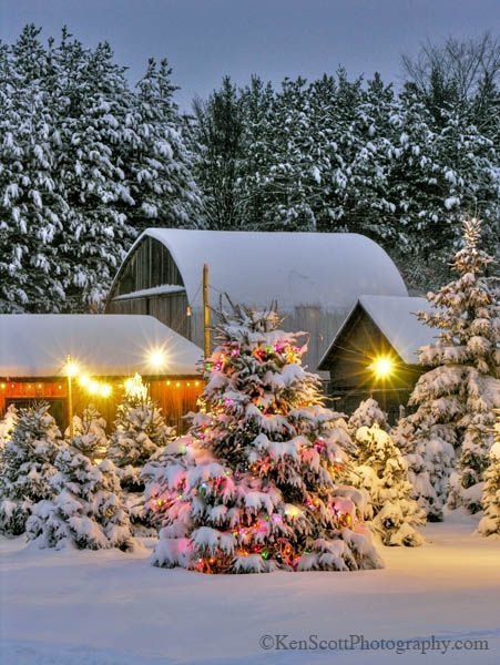 Christmas Tree Farm Leelanau County Michigan I Love Outside Christmas Trees All Lit Up Along Christmas Tree Farm Christmas Tree Christmas Tree Photography