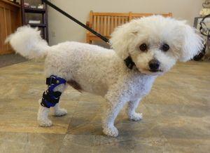 Acl Dog Brace Dog Cruciate Brace Dog Knee Braces Dog Knee