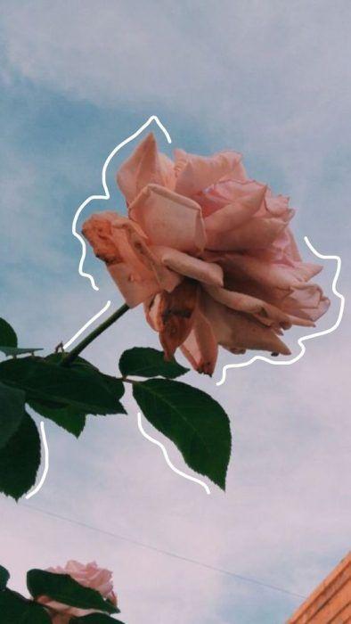 Fondo de pantalla de celular para mujer con una rosa y un cielo azul