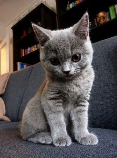 Blows Raspberrries Kittens Cutest Kittens Cute Cats