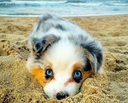 15 Super Cute Puppies You Ll Have To See To Believe Super Cute