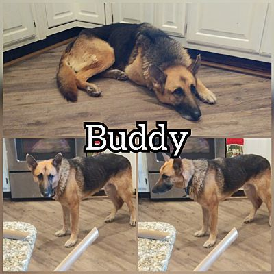 Lavon Tx Mixed Breed Large Meet Buddy A Pet For Adoption Pet Adoption Dachshund Adoption Pets