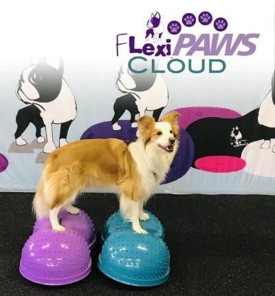 Flexipaws Cloud Dog Training Agility Training For Dogs Dog Agility