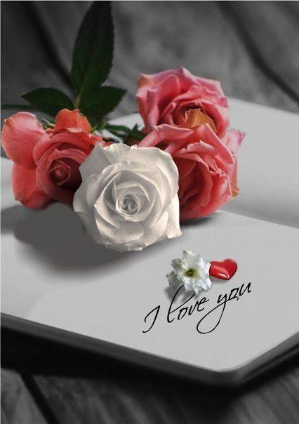 ورود و قلوب و حروف 30 Imagens De Amor Rosas Vermelhas Imagens Romanticas