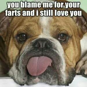 You Blame Me For Your Farts Dogsfunnyfart Bulldog Meme Bulldog Puppies Olde English Bulldogge