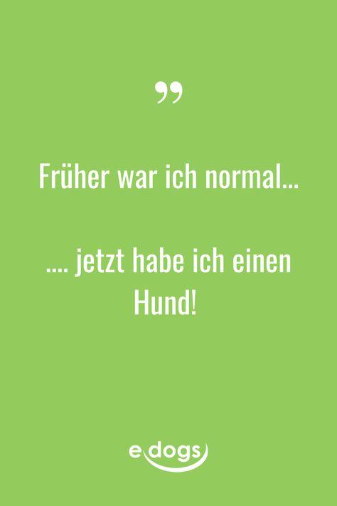 Normal sein ist doch langweilig! #hundefreunde #hundeliebe #hundespreuche #hundezitate #nichtohnemeinenhund #hundeblog #hundeblogger #hund #herrchen